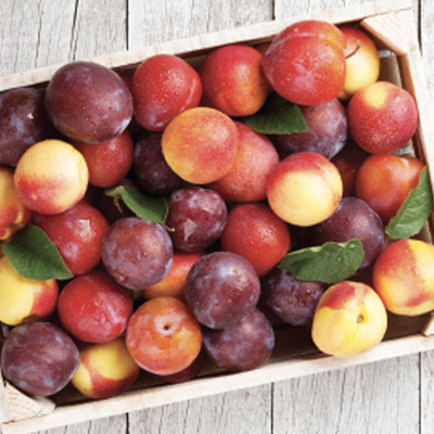 Peaches, Nectarines Red or Black Plums $1.88/lb