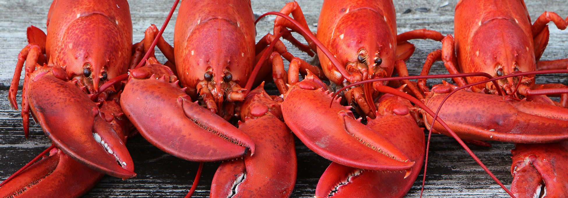 trigs-homepg-banner-lobster-fest-fathers-day.jpg