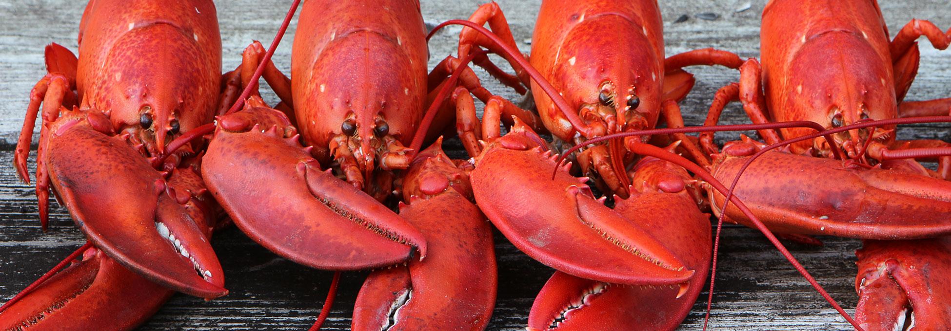 trigs-homepg-banner-lobster-fest-fathers-day.jpg