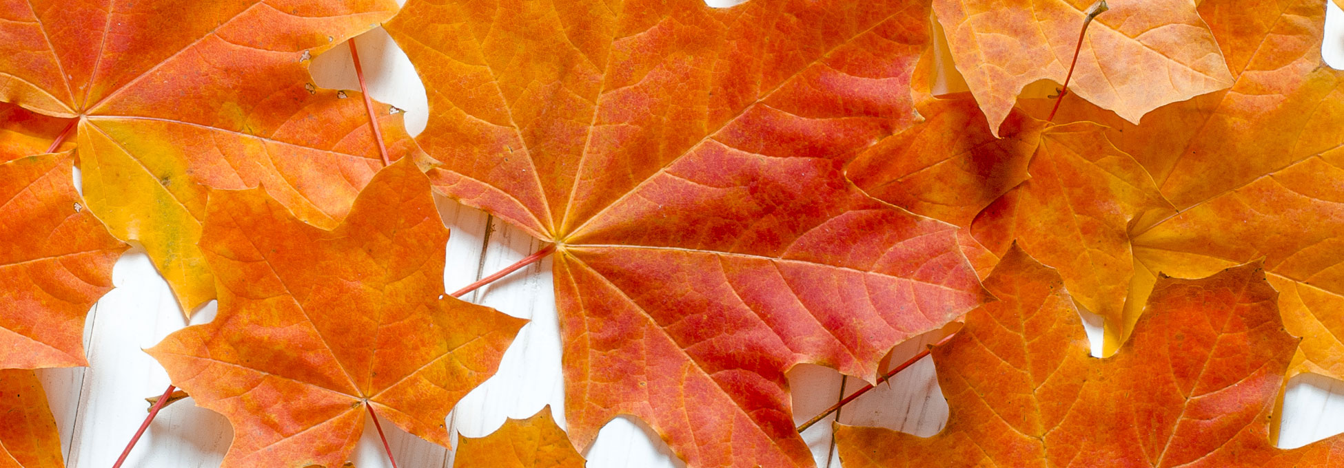 trigs-homepg-Fall-leaves.jpg