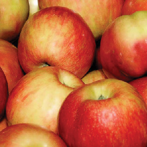 Honeycrisp Apples $1.88/lb